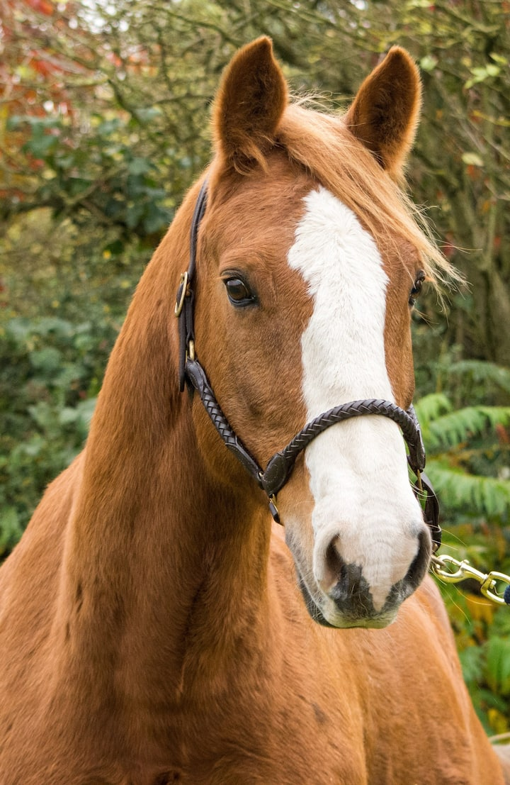 One of our Mares : Daisy