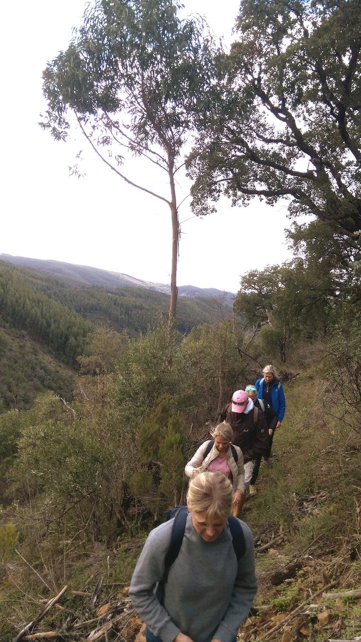 Group hike to a secret waterfall