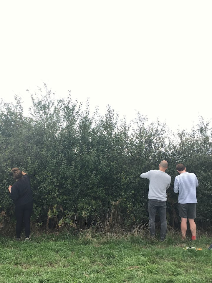 Foraging for Sloe berries in late August