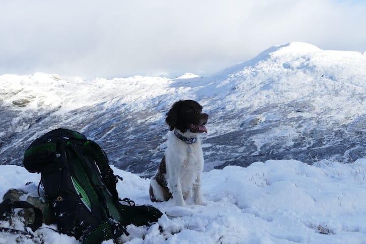 Dexter the mountain dog
