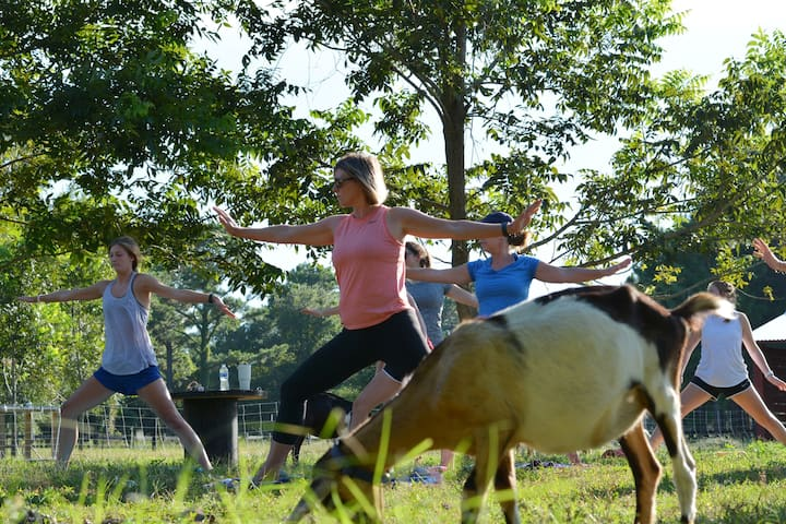 You can actually do yoga with goats!