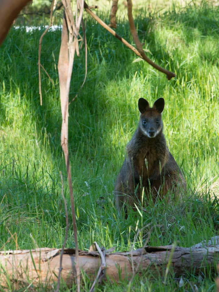 Wildlife spotting opportunities