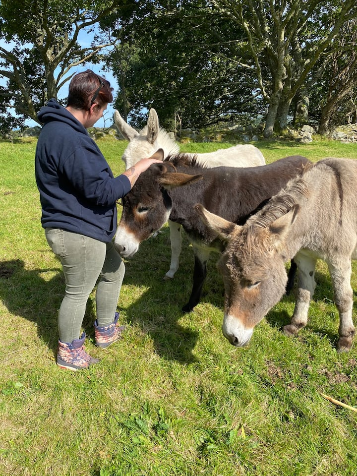 Quiet time with donkeys.
