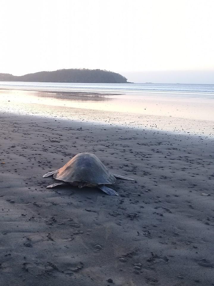 We will see turtles seasonally.