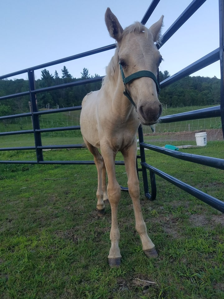 Chincoteague Pony is only 5 months old