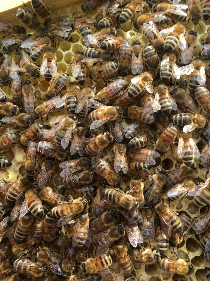 The Bees hard at work