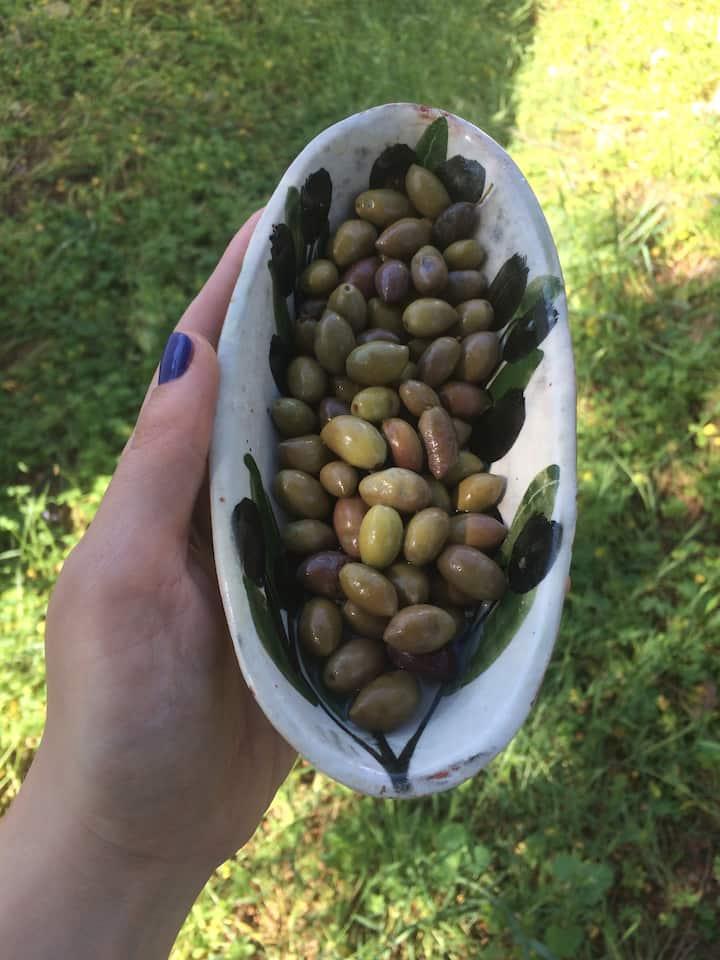 We will taste a variety of Greek olives