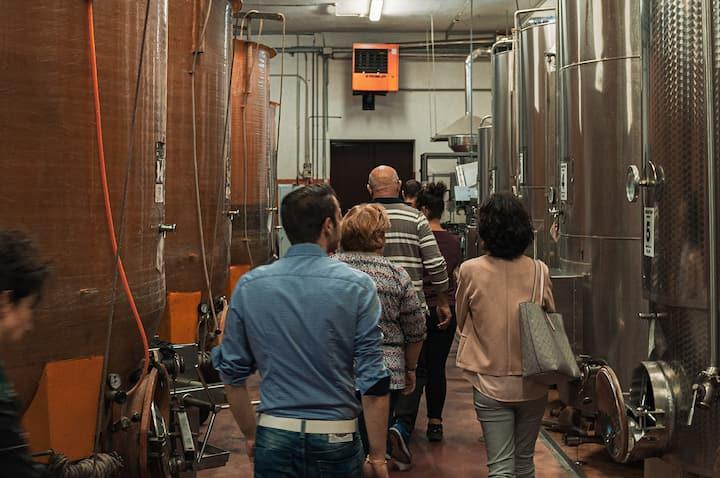 Visita tra i locali di vinificazione