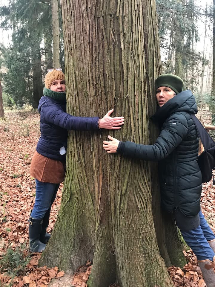 Tanke die Weisheit der Bäume