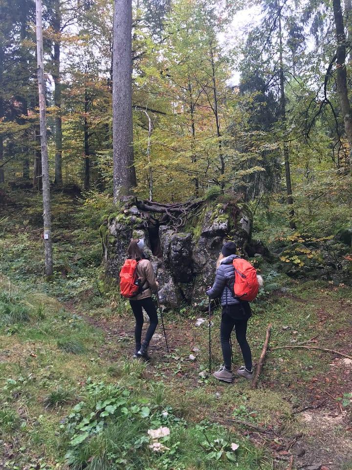 Im Feenwald zu sich kommen
