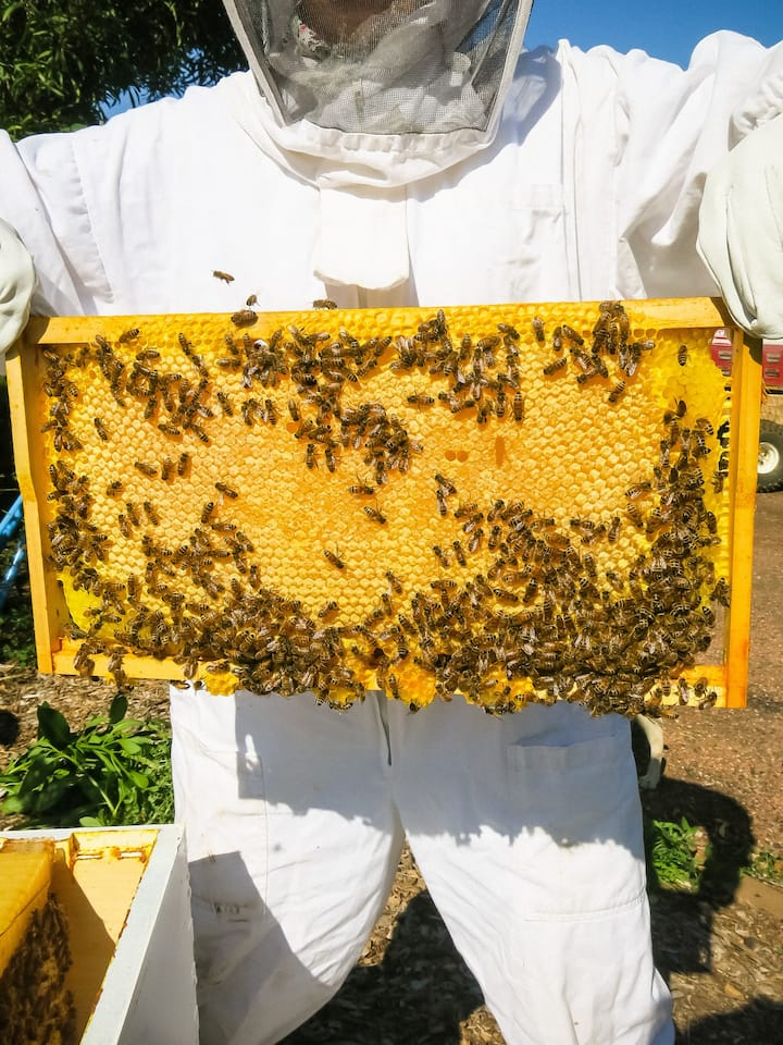 Holding a full frame of honey