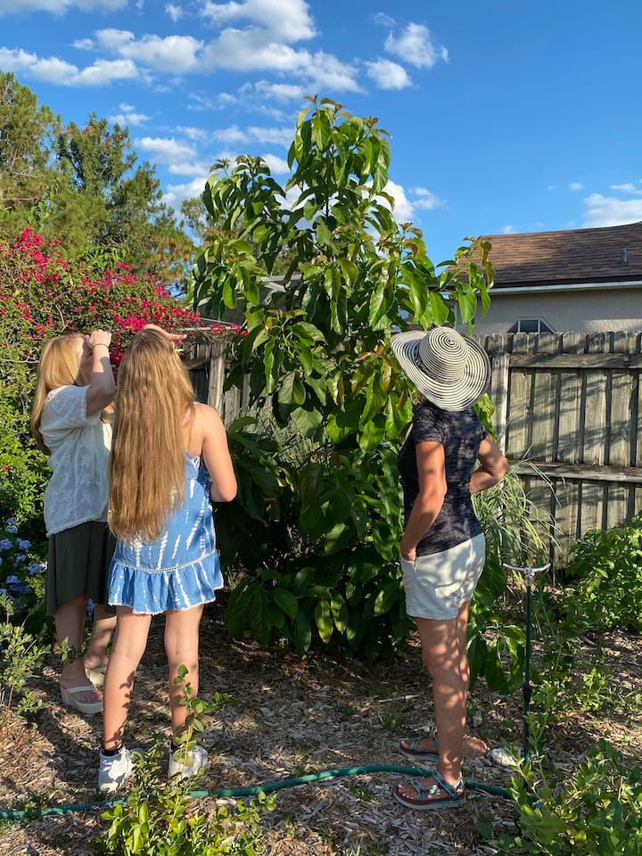 Fruit forest tour