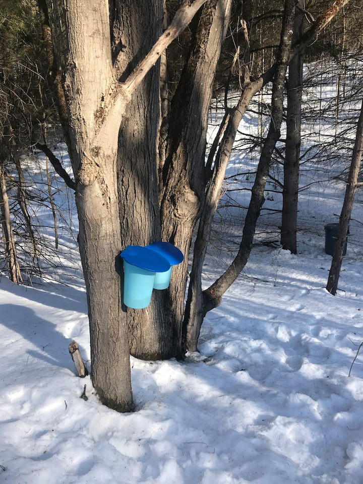 Our Maple Syrup Buckets!