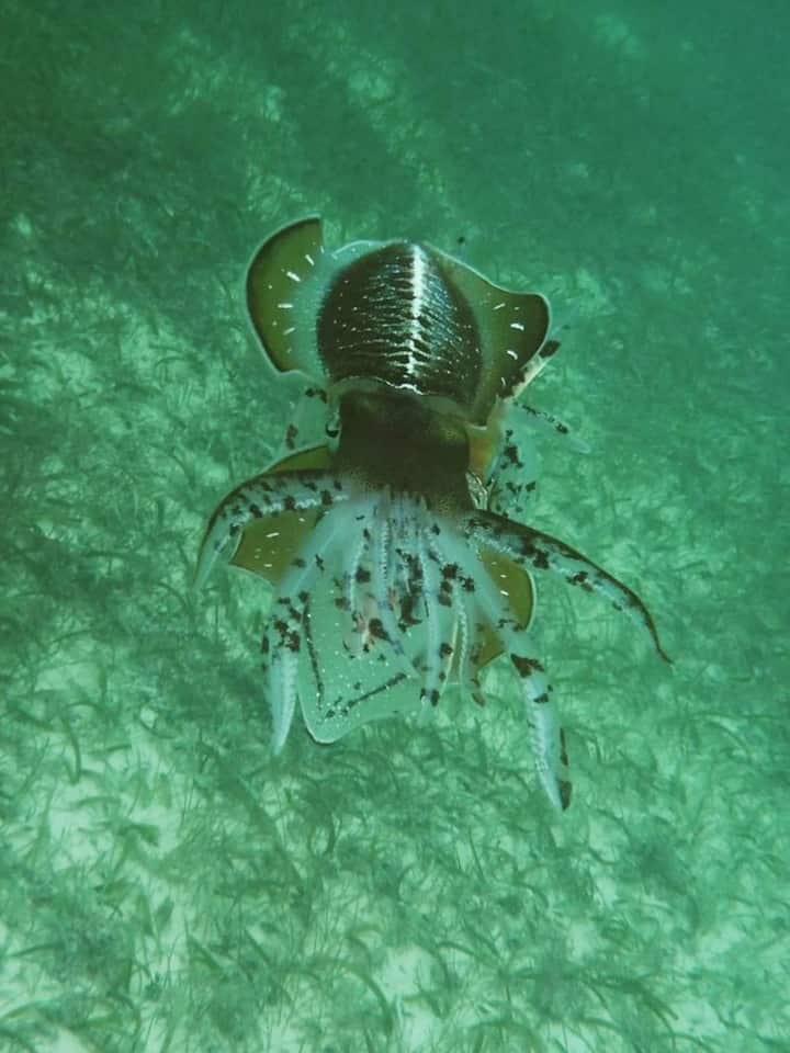 Calamar | Squid.