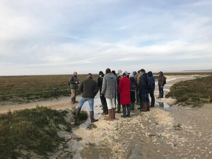 Visite des phoques La Maye Le Crotoy