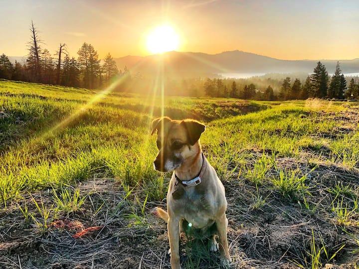 Even pups enjoy this sunrise hike