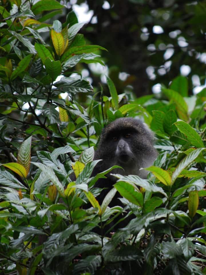 Monkey in Kilimanjaro mountain