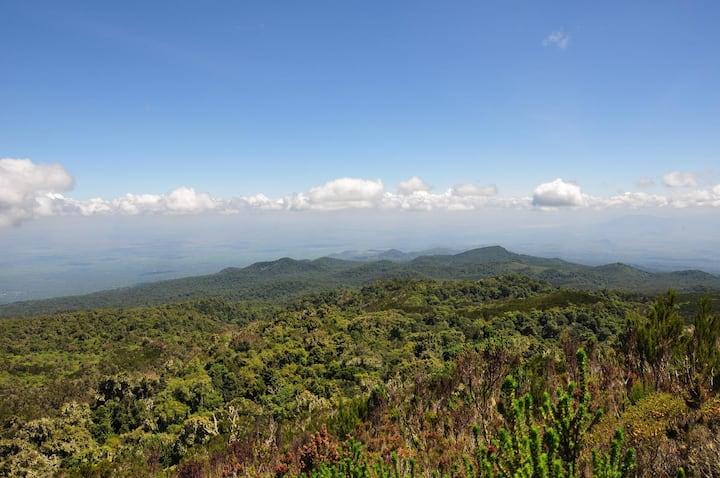 Green vegetation on Kilimanjaro