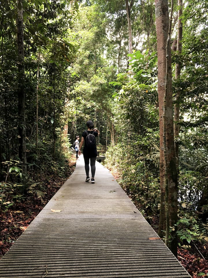 Thick forest layer and nice boardwalk