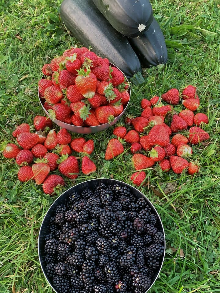 Courgette, strawberries & blackberries
