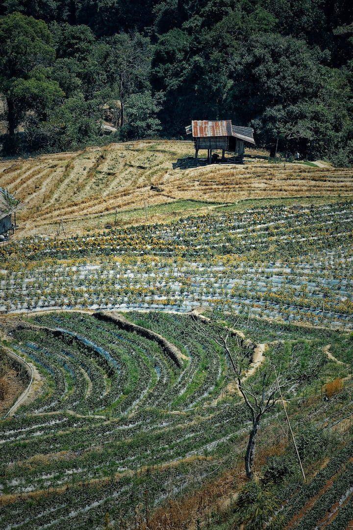 This land used to plant opium before