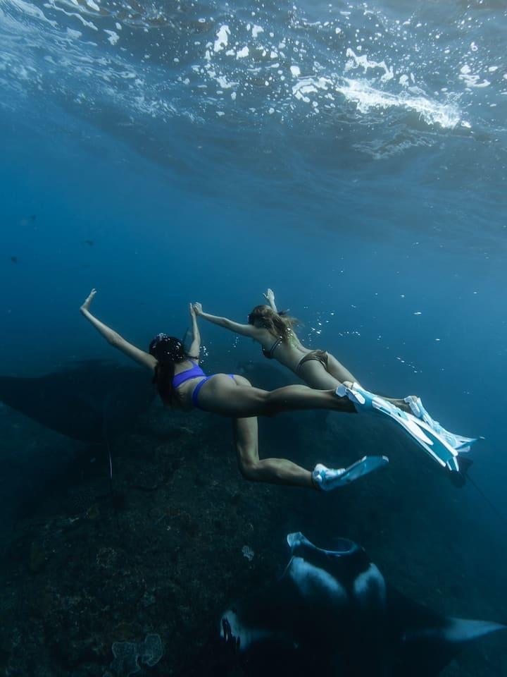 Swim With Giant Manta Rays