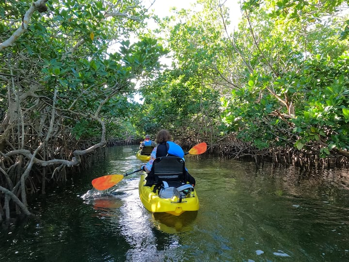 Learn about the mangroves of the keys.