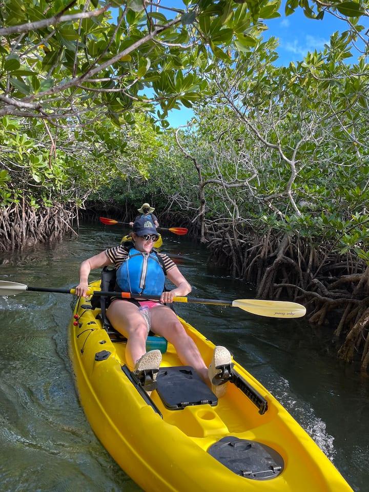 Enjoy the Mangrove Tunnels