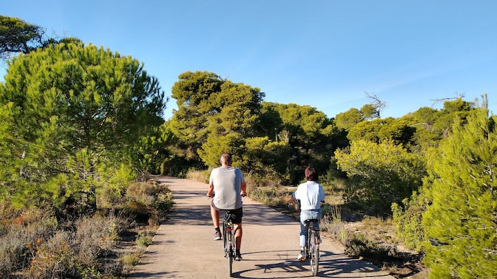 Cycle track through Pine Trees & Nature