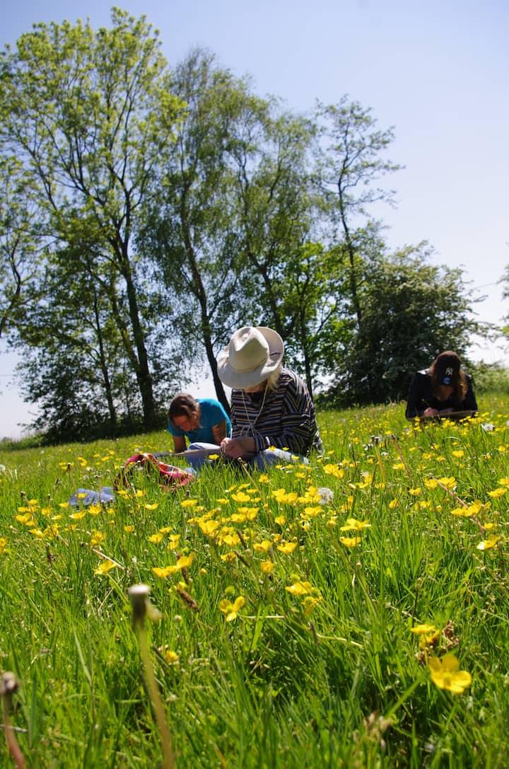 drawing in the flower field