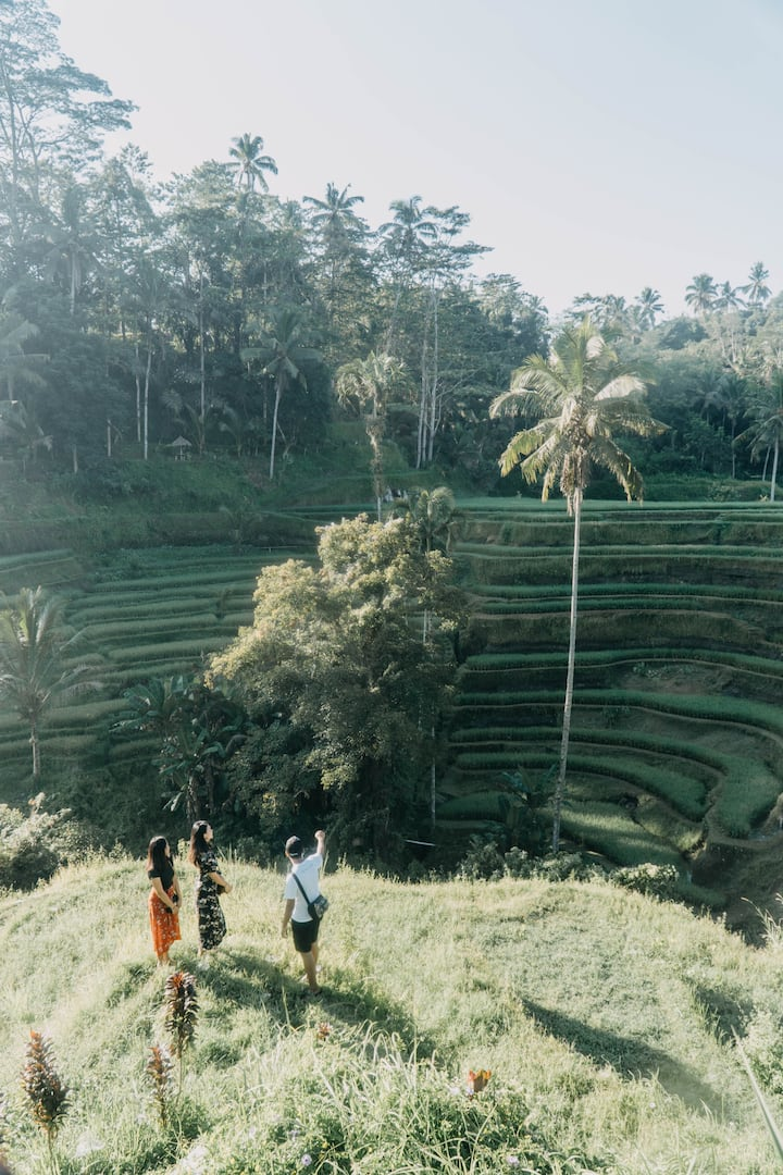 rice fields of tegallalang