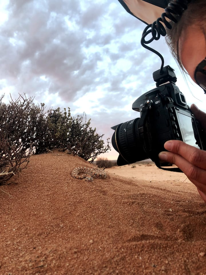 Photographing a Horned Adder