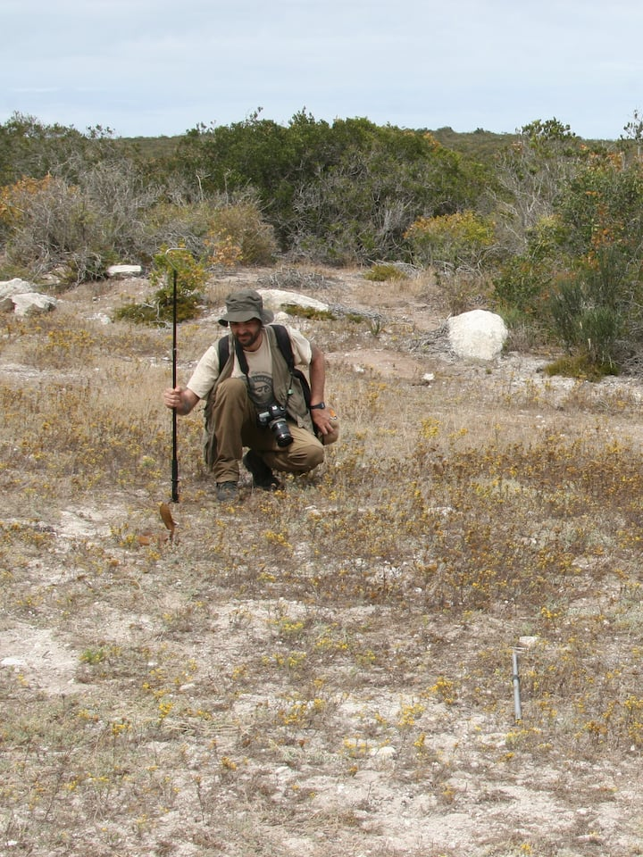 Looking for snakes in the Fynbos