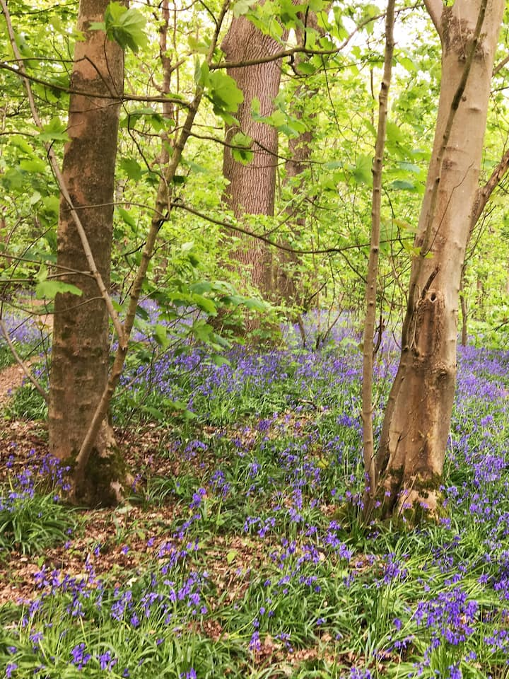 Stanmer Bluebells in the Summer!