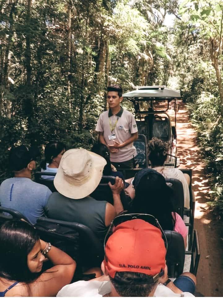 Safari dans lá forêt avant de bateau