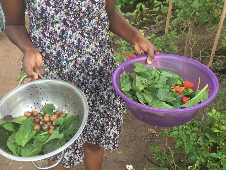 Organic salad from Healing T's Garden