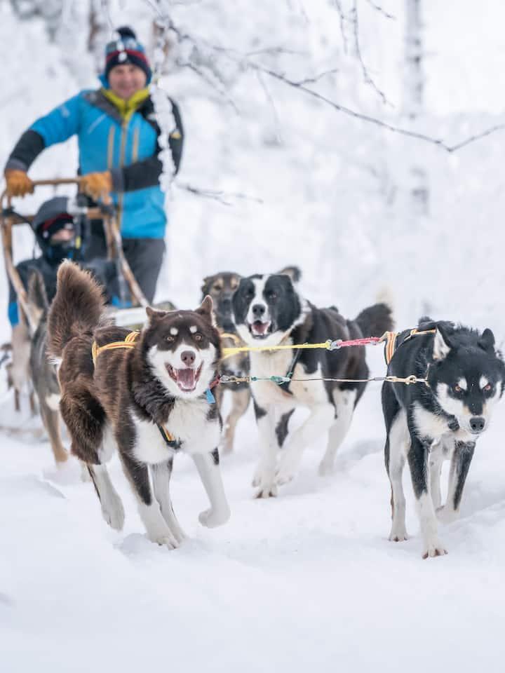 dogsledding in winter