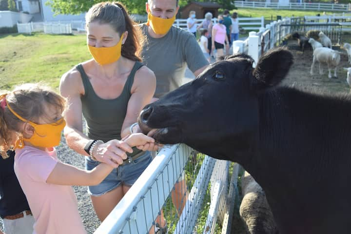 Feed animals from your hand.