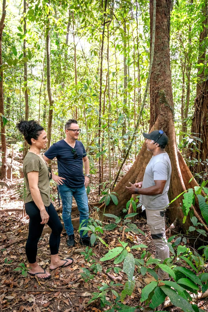 Guided walk in the Daintree rainforest