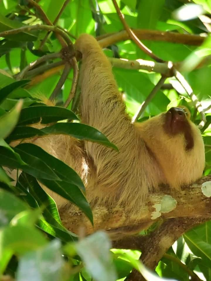 I invite you to look for sloths!