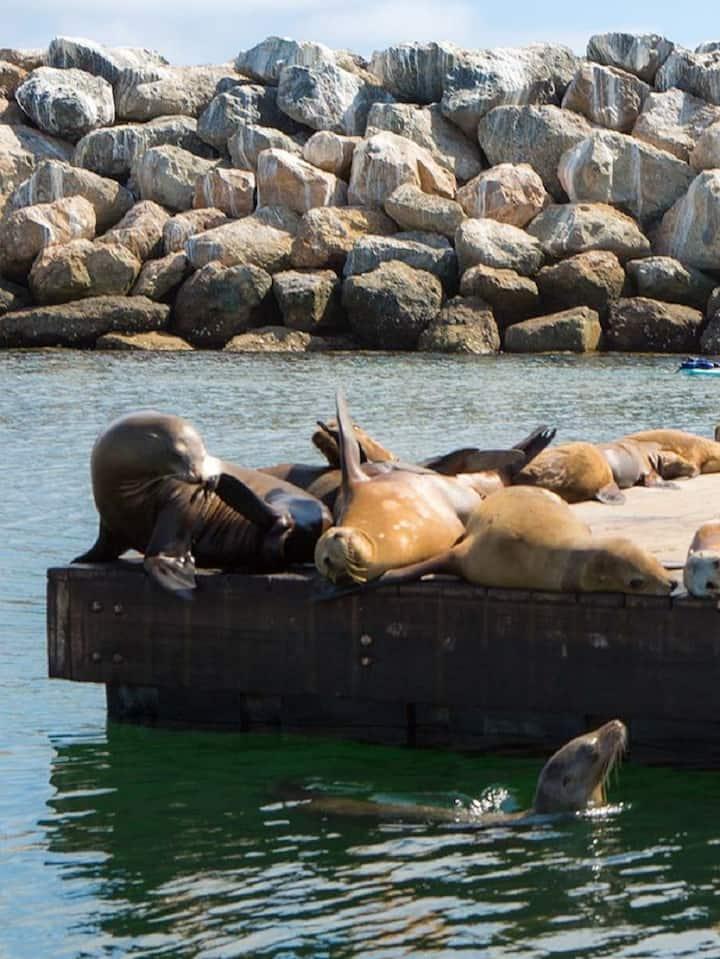 Seals  sun bathing in break water area
