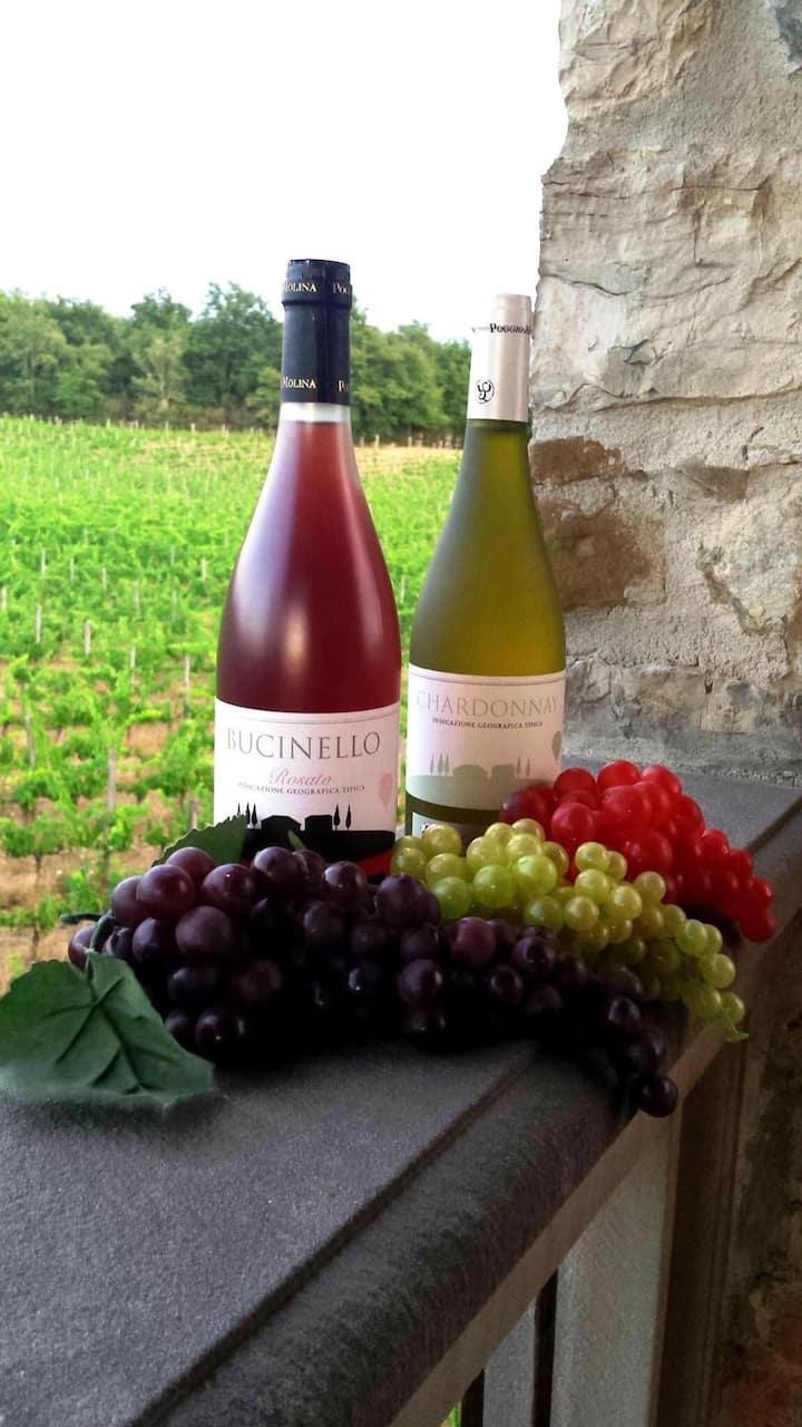 Poggio Molina wines