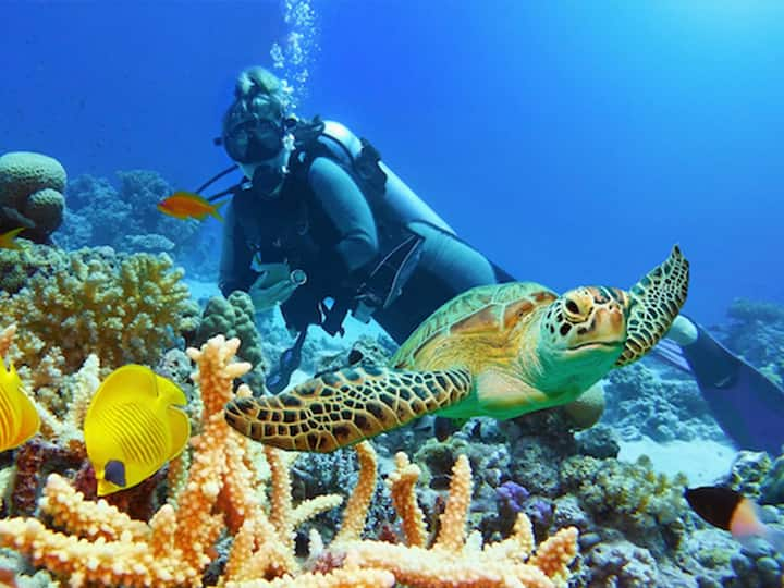 woman diving with a turtle
