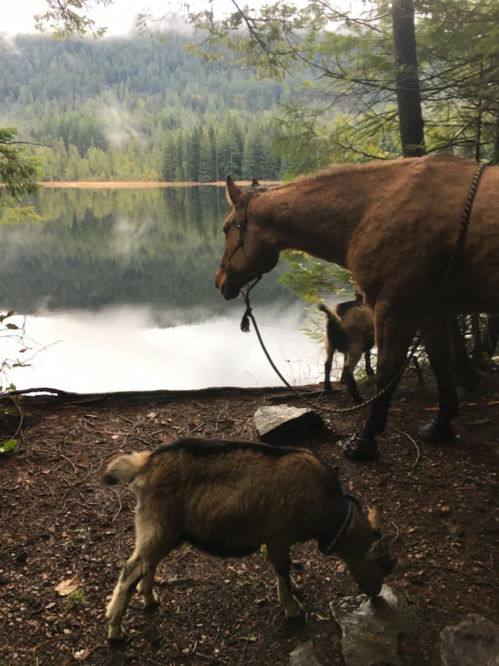 Grafton Lake trail (horse not included)