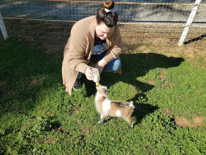 Pet, hold and feed our goats