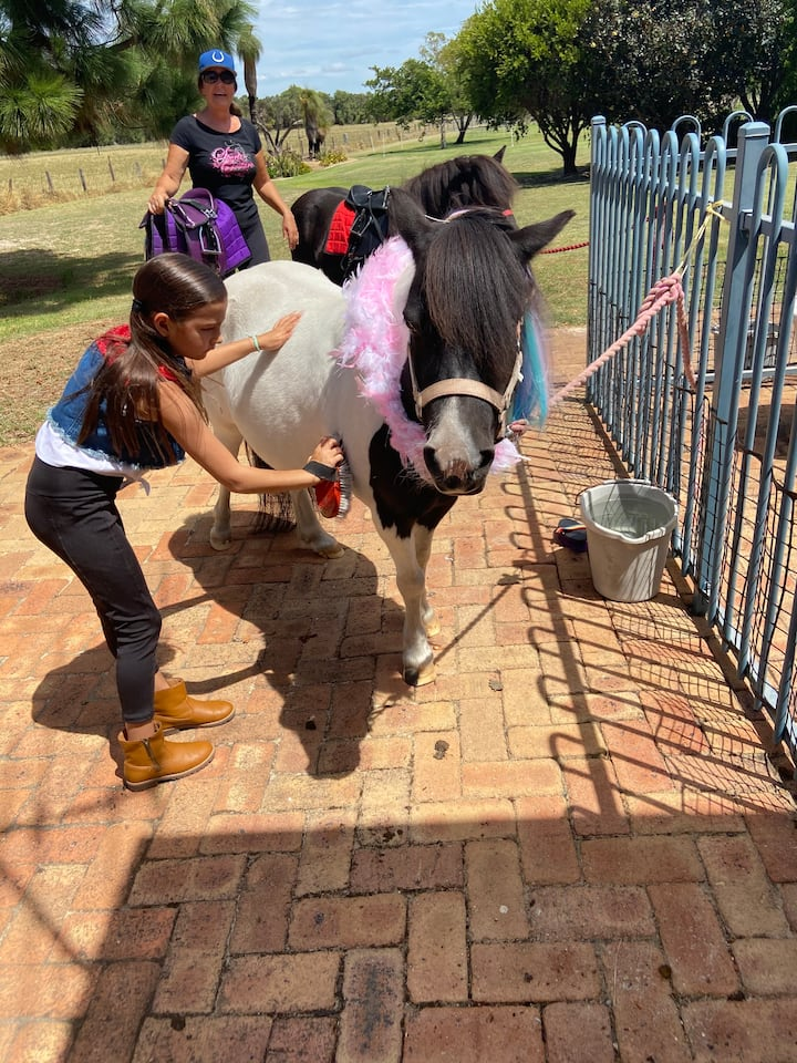 Our pony pals learning  how to groom