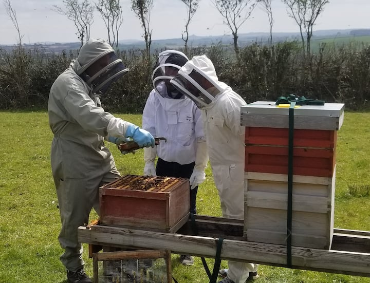 Examining one of the brood frames