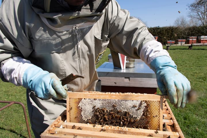 David inspecting one of the hives
