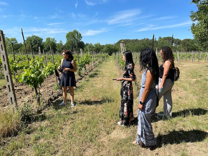 Lessons in the vineyard