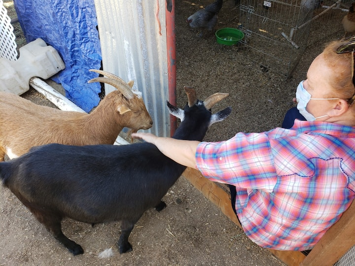 The goats always want to be in the mix